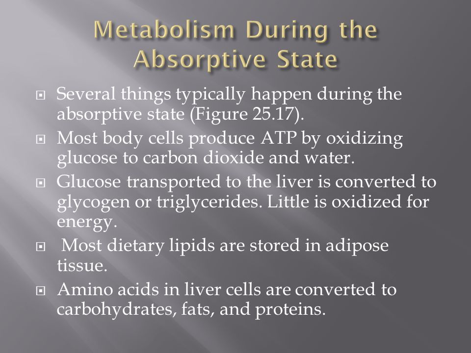 Metabolism During the Absorptive State