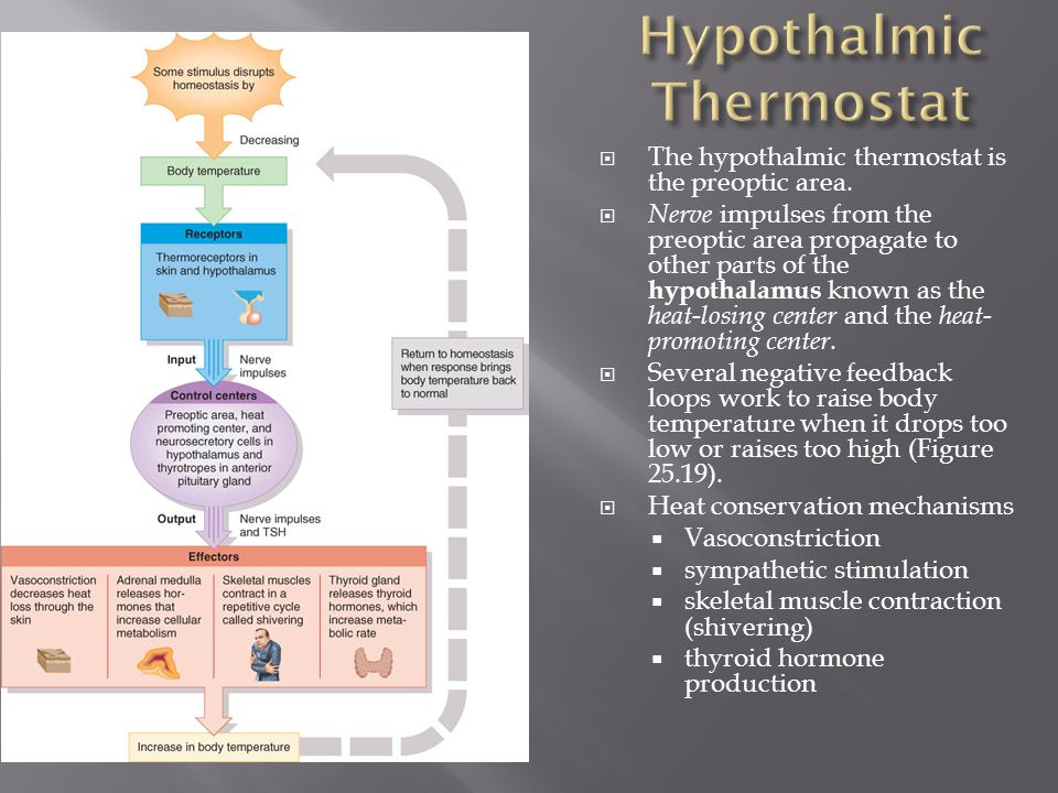 Hypothalmic Thermostat