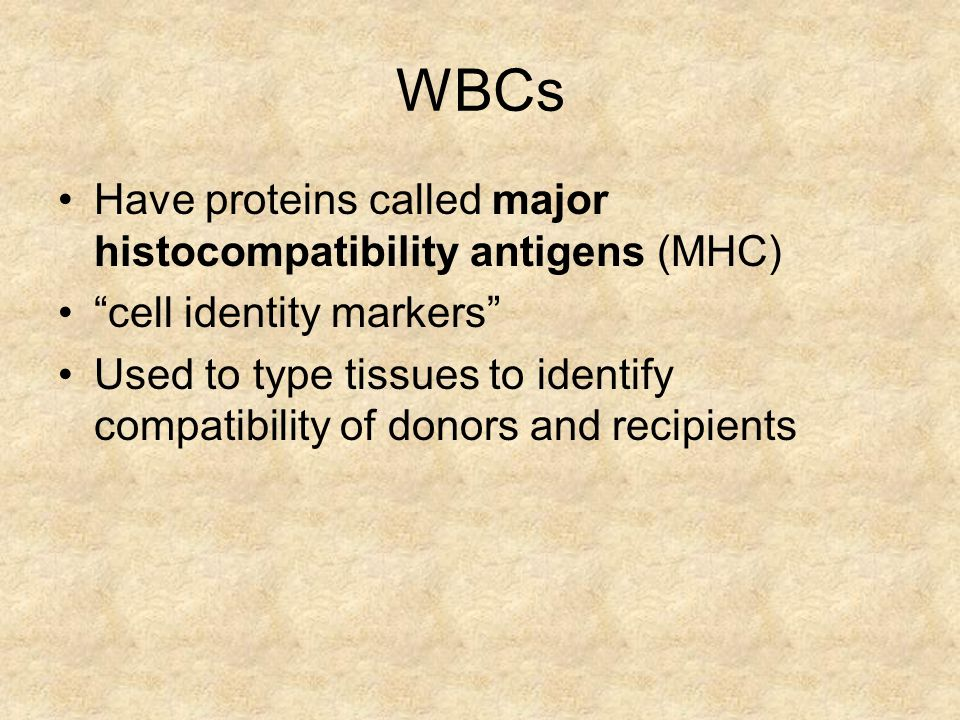 WBCs Have proteins called major histocompatibility antigens (MHC)