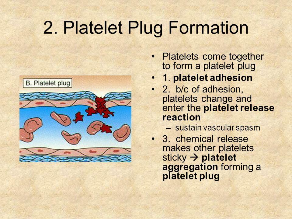 2. Platelet Plug Formation