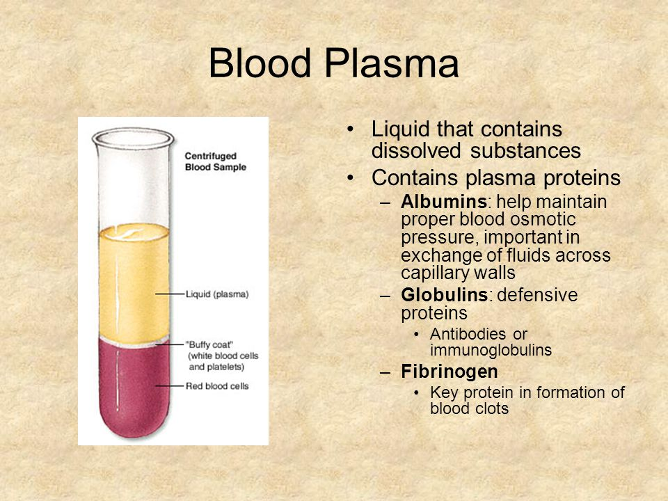 Blood Plasma Liquid that contains dissolved substances