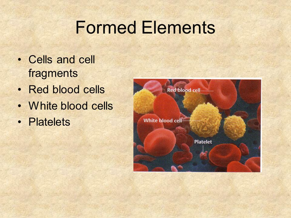 Formed Elements Cells and cell fragments Red blood cells