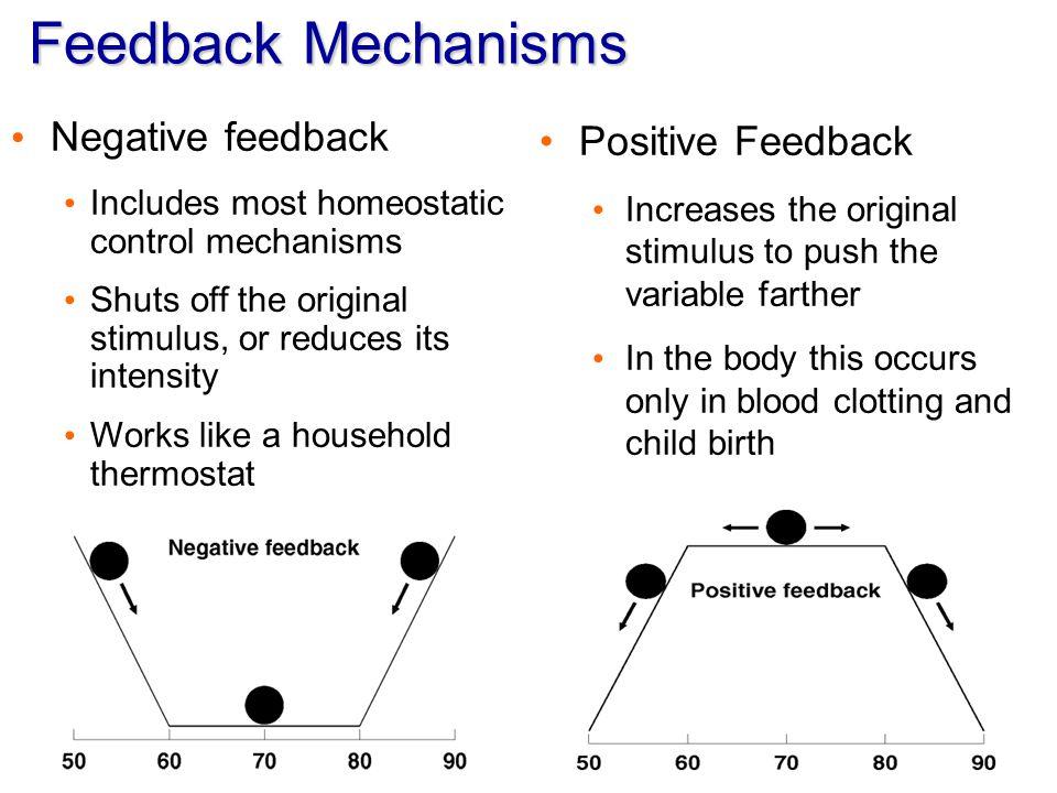 Feedback Mechanisms Negative feedback Positive Feedback