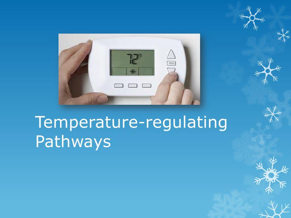 Temperature-regulating Pathways