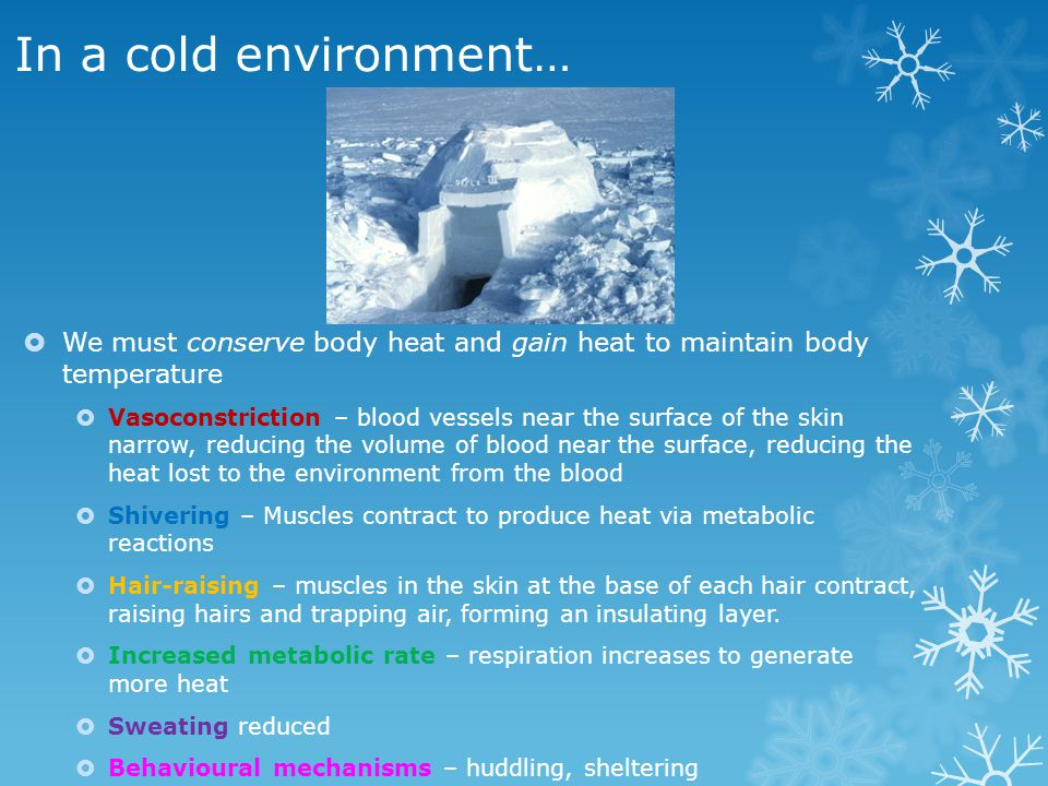 In a cold environment… We must conserve body heat and gain heat to maintain body temperature.