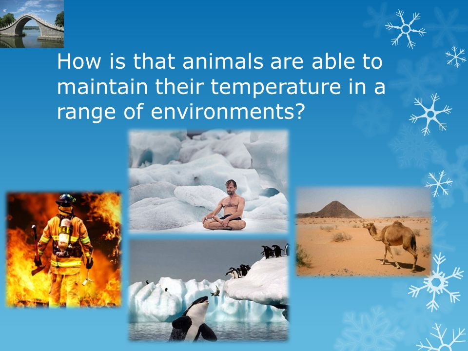 How is that animals are able to maintain their temperature in a range of environments