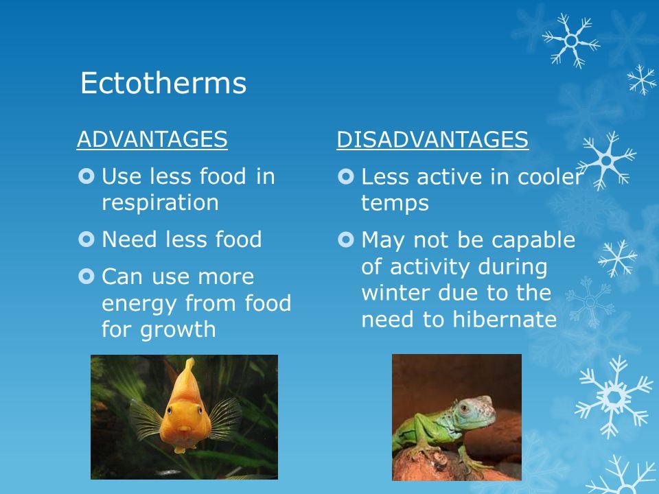 Ectotherms DISADVANTAGES ADVANTAGES Less active in cooler temps