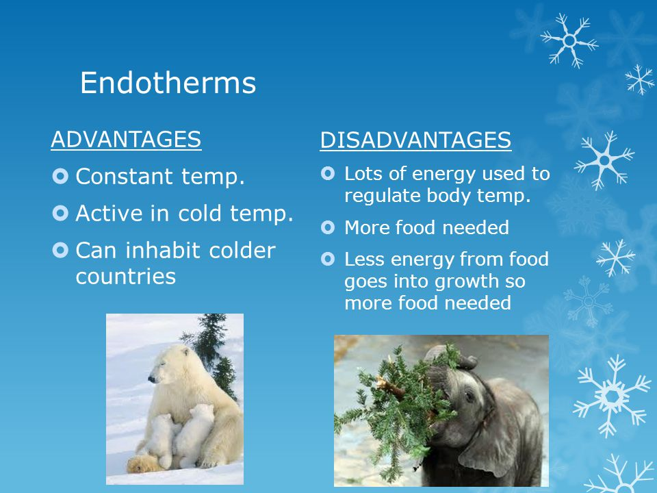 Endotherms ADVANTAGES Constant temp. DISADVANTAGES