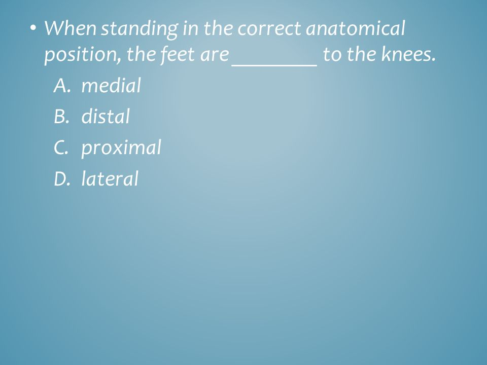 When standing in the correct anatomical position, the feet are ________ to the knees.