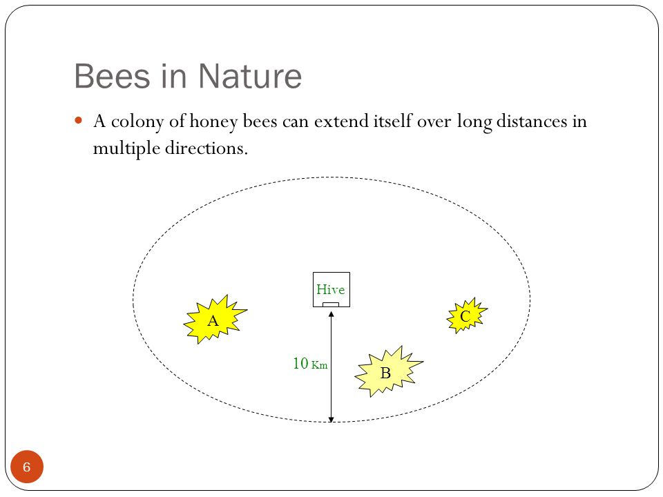 Bees in Nature A colony of honey bees can extend itself over long distances in multiple directions.