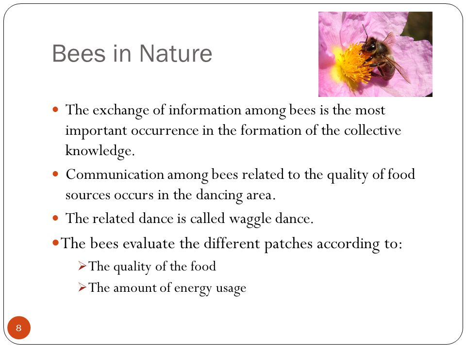 Bees in Nature The bees evaluate the different patches according to: