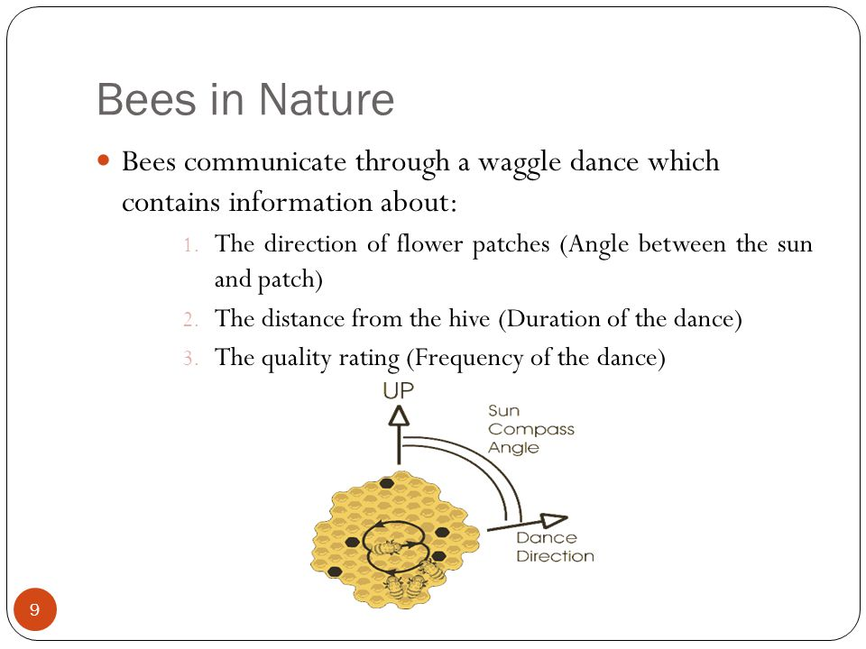 Bees in Nature Bees communicate through a waggle dance which contains information about: