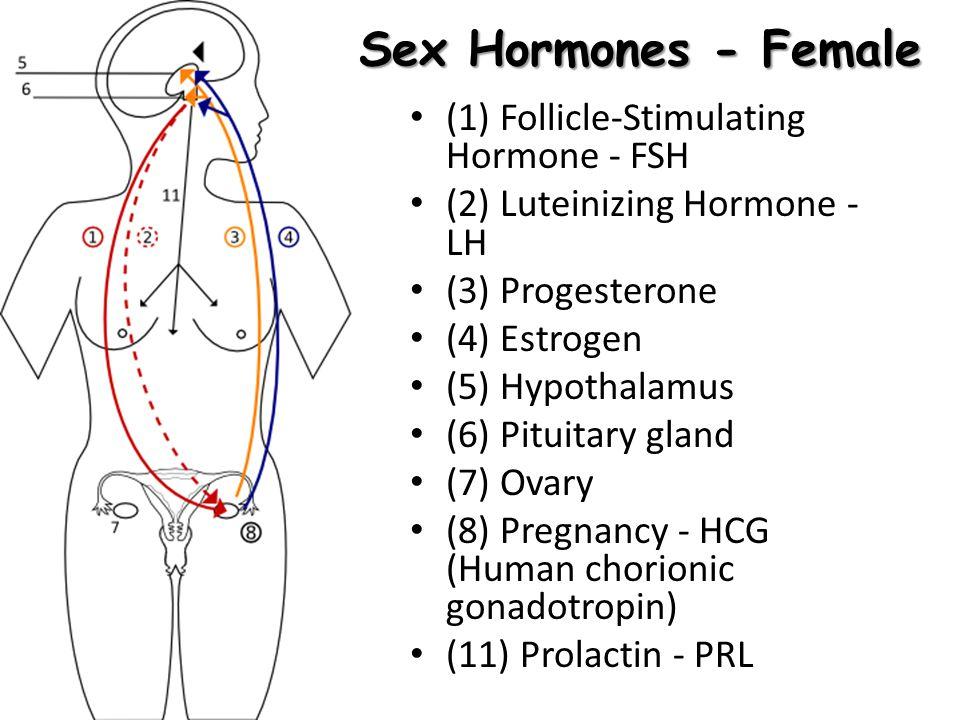Sex Hormones - Female (1) Follicle-Stimulating Hormone - FSH