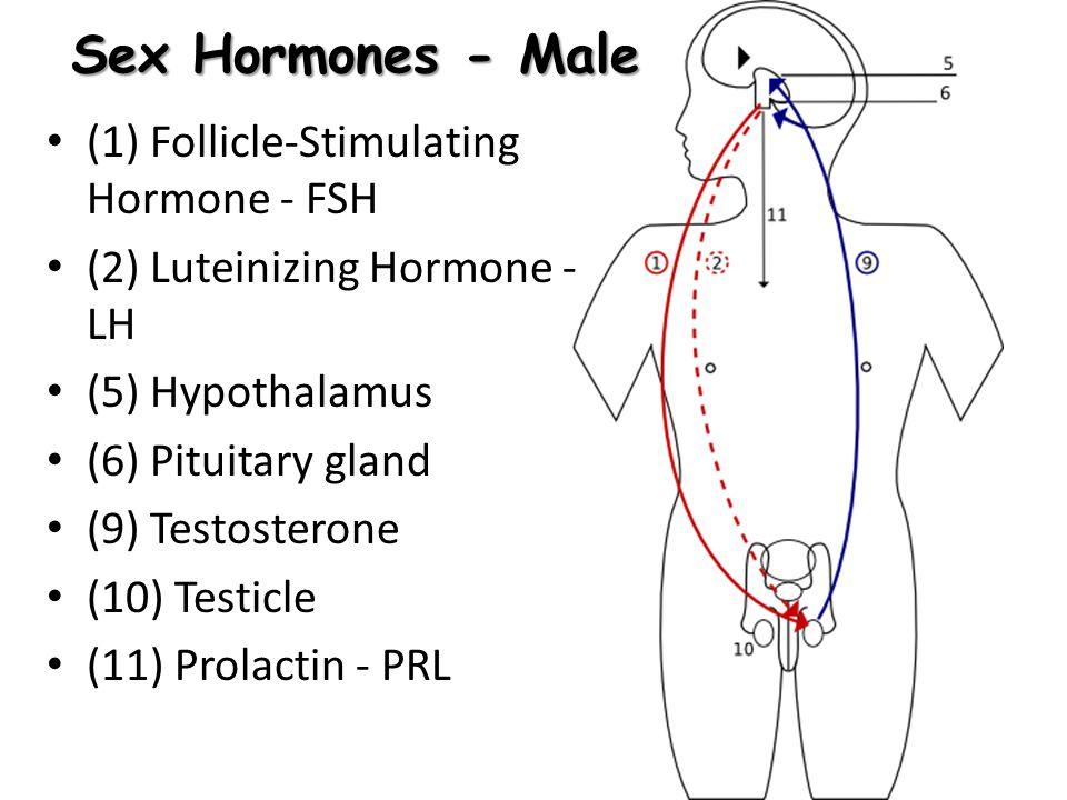 Sex Hormones - Male (1) Follicle-Stimulating Hormone - FSH