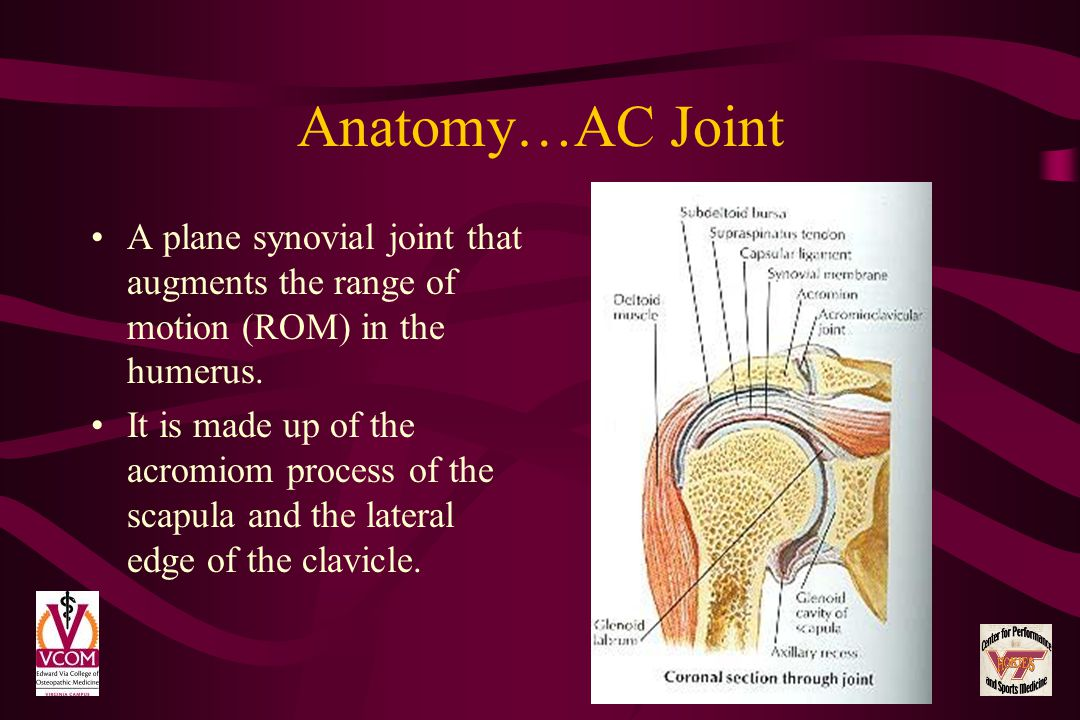 Anatomy…AC Joint A plane synovial joint that augments the range of motion (ROM) in the humerus.