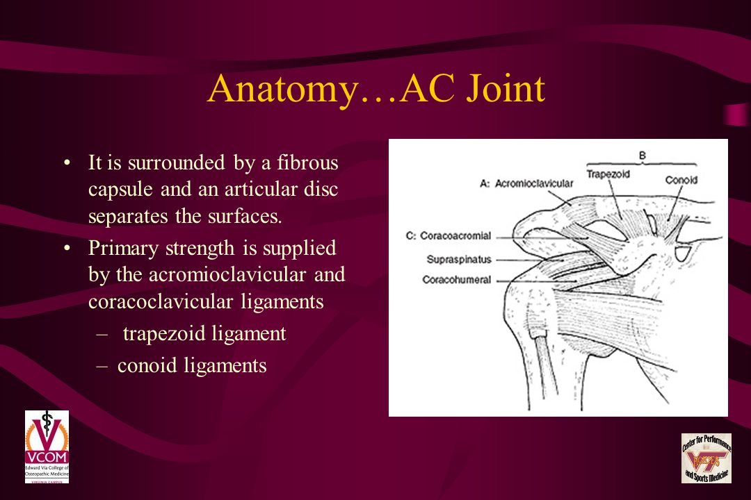 Anatomy…AC Joint It is surrounded by a fibrous capsule and an articular disc separates the surfaces.