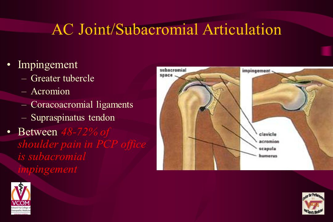 AC Joint/Subacromial Articulation