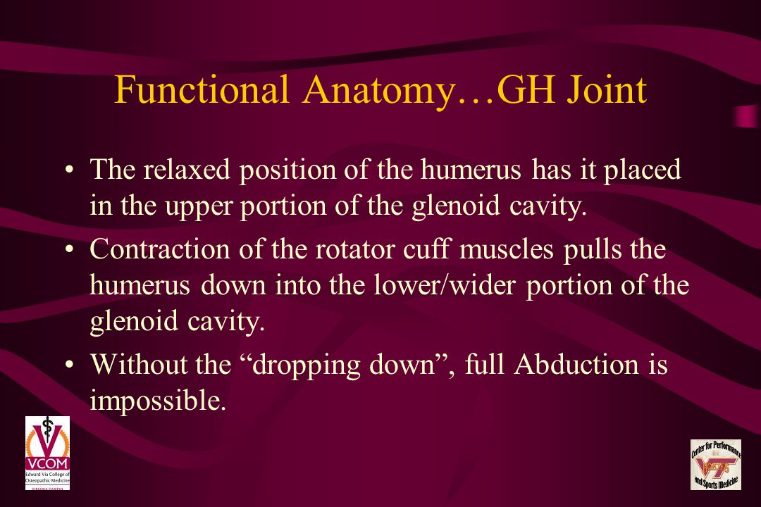 Functional Anatomy…GH Joint