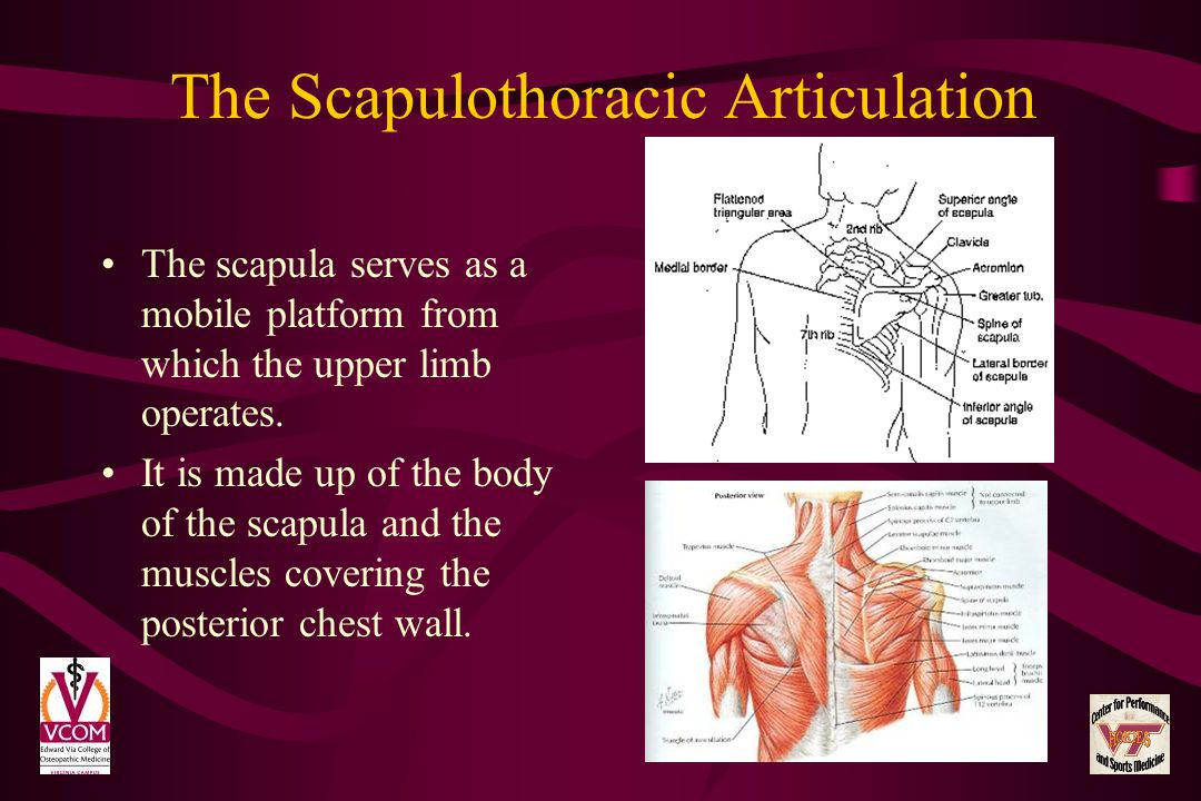 The Scapulothoracic Articulation