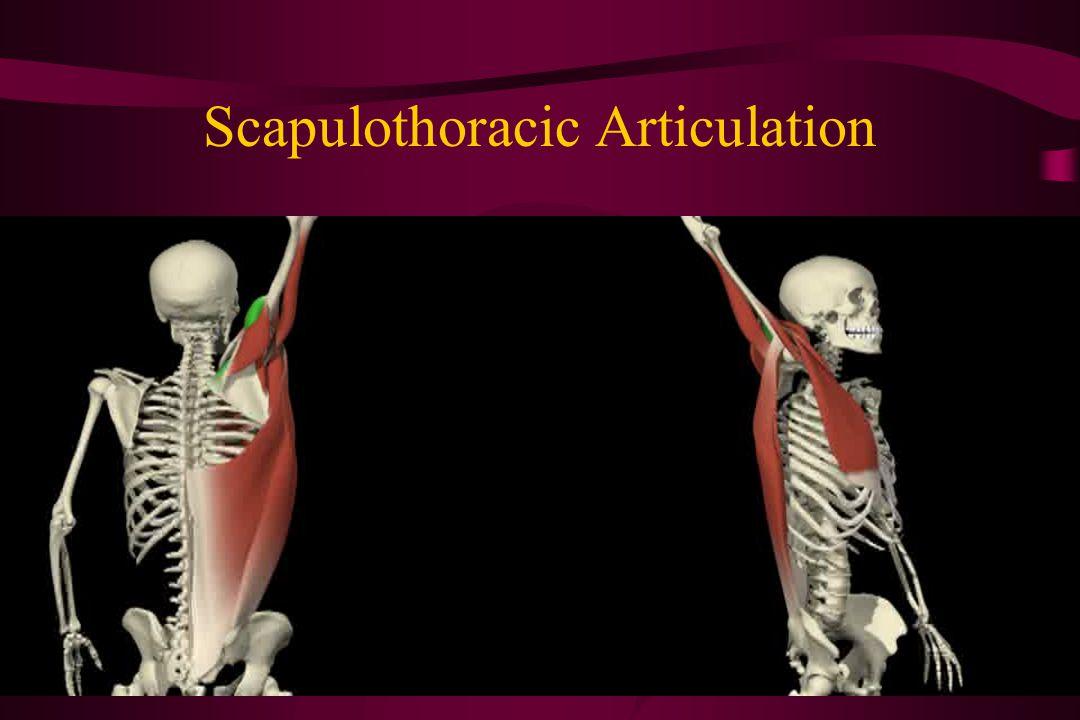 Scapulothoracic Articulation