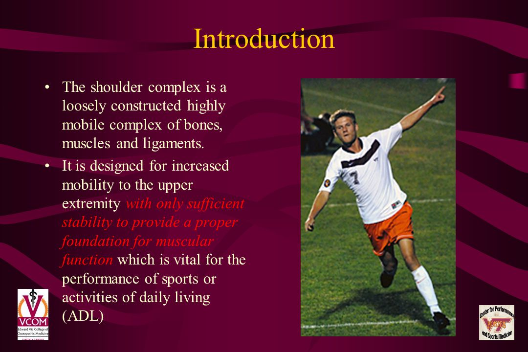 Introduction The shoulder complex is a loosely constructed highly mobile complex of bones, muscles and ligaments.
