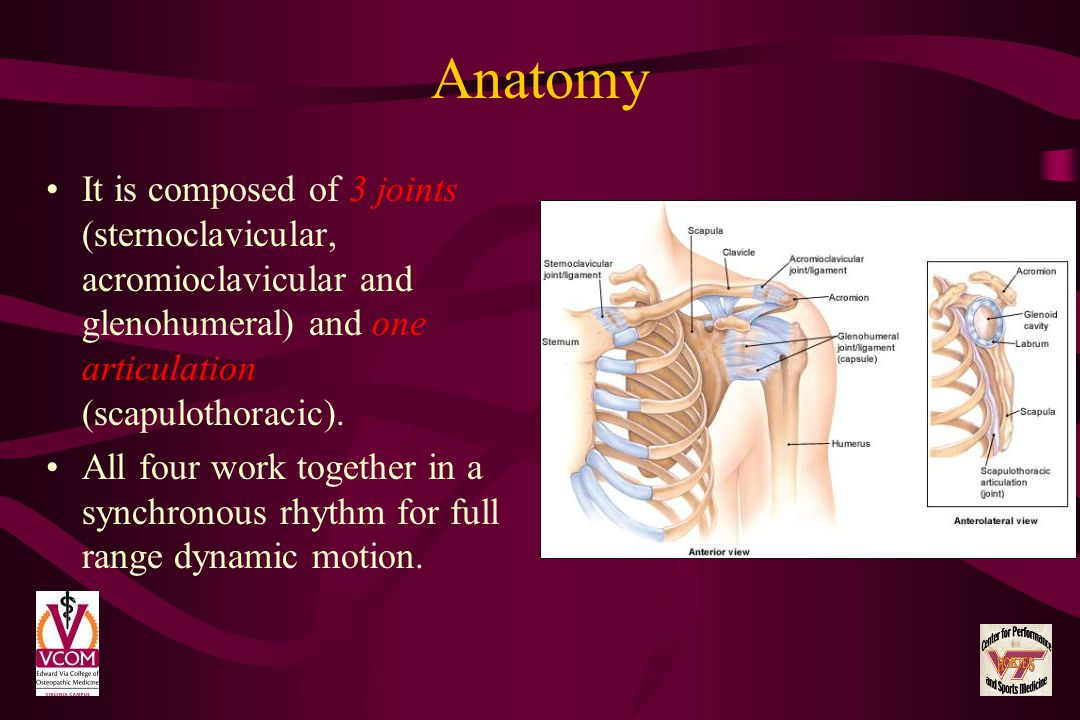 Anatomy It is composed of 3 joints (sternoclavicular, acromioclavicular and glenohumeral) and one articulation (scapulothoracic).