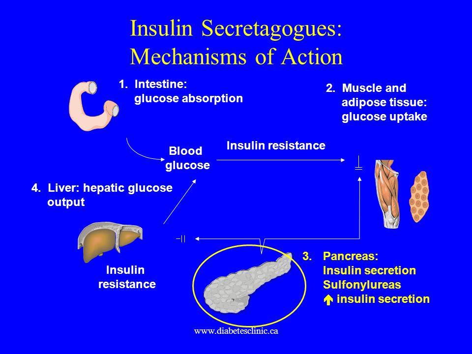 Insulin Secretagogues: Mechanisms of Action