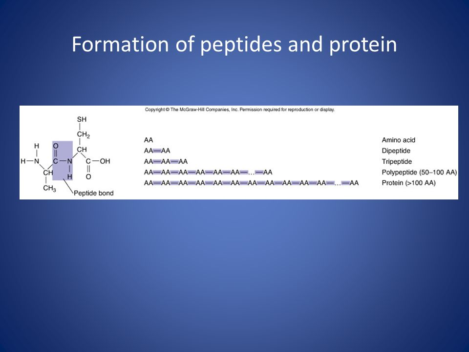 Formation of peptides and protein