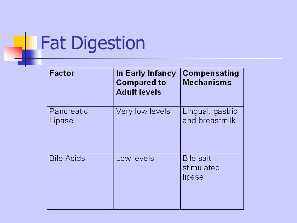 Fat Digestion