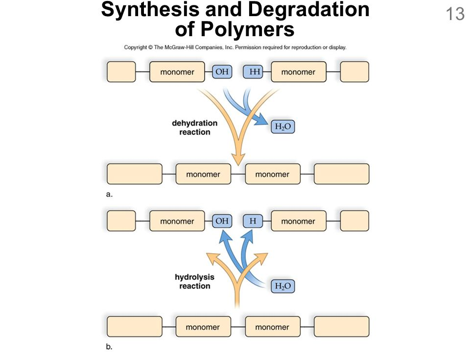 Synthesis and Degradation of Polymers