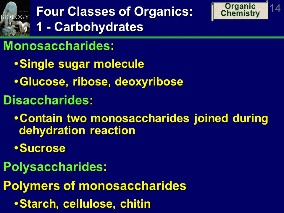 Four Classes of Organics: 1 - Carbohydrates