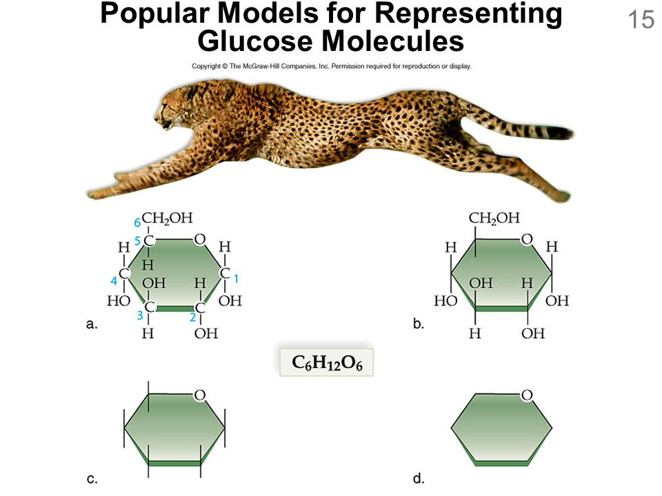 Popular Models for Representing Glucose Molecules