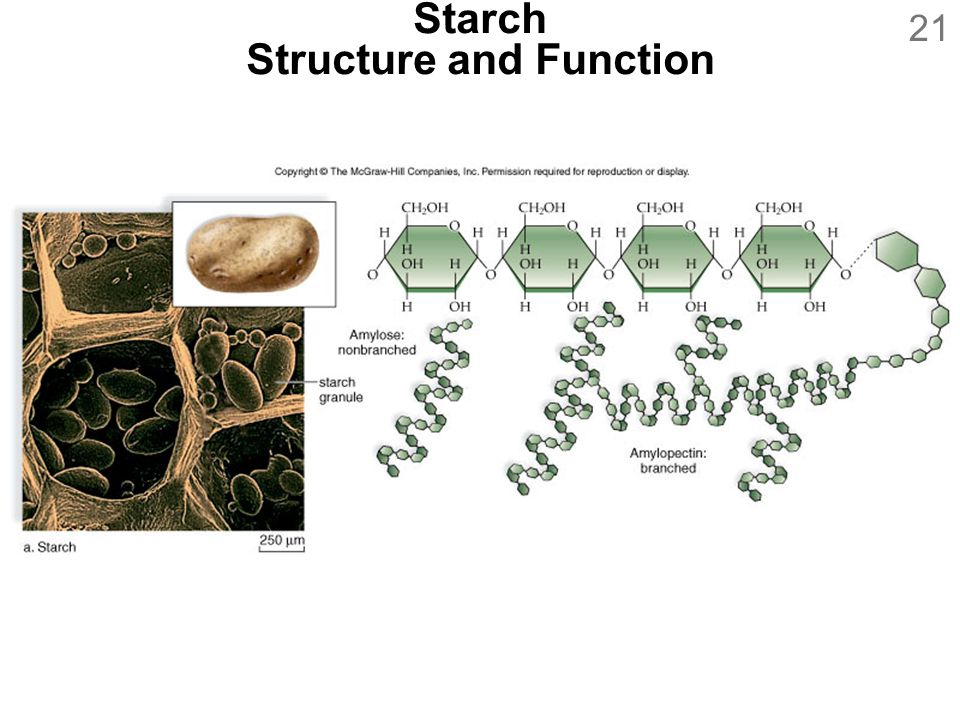 Starch Structure and Function