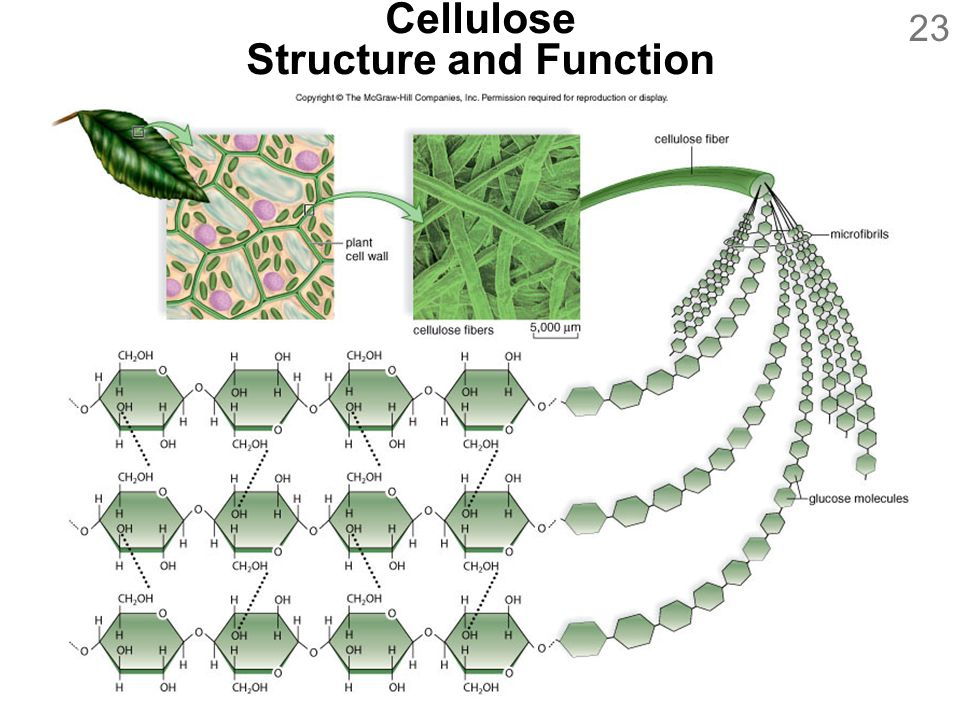 Cellulose Structure and Function
