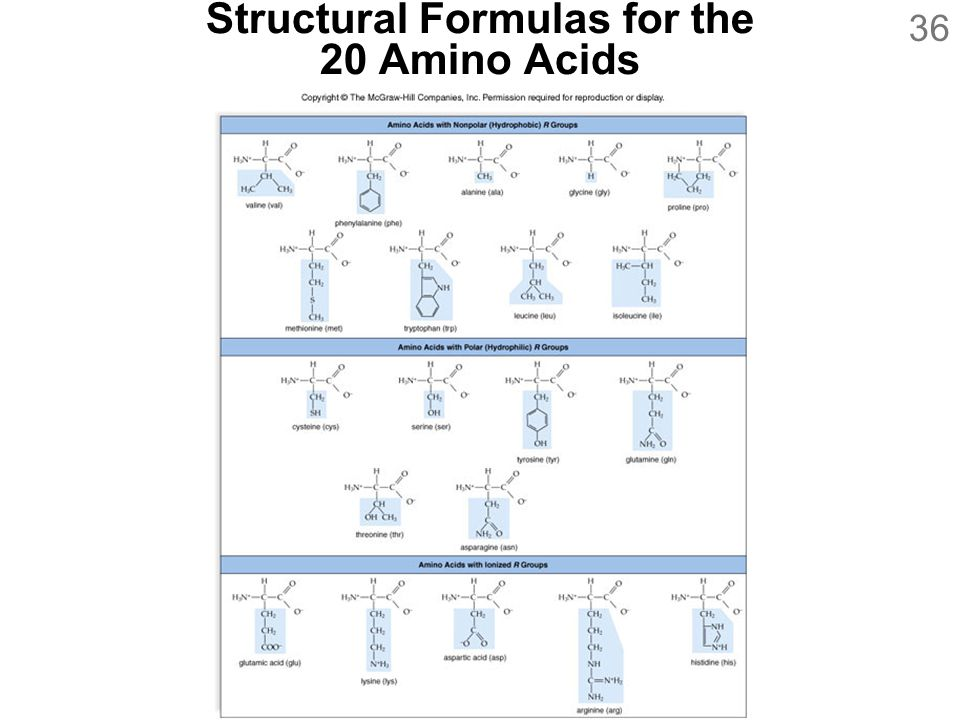 Structural Formulas for the 20 Amino Acids