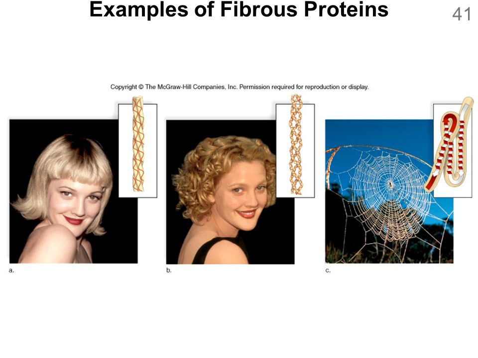 Examples of Fibrous Proteins