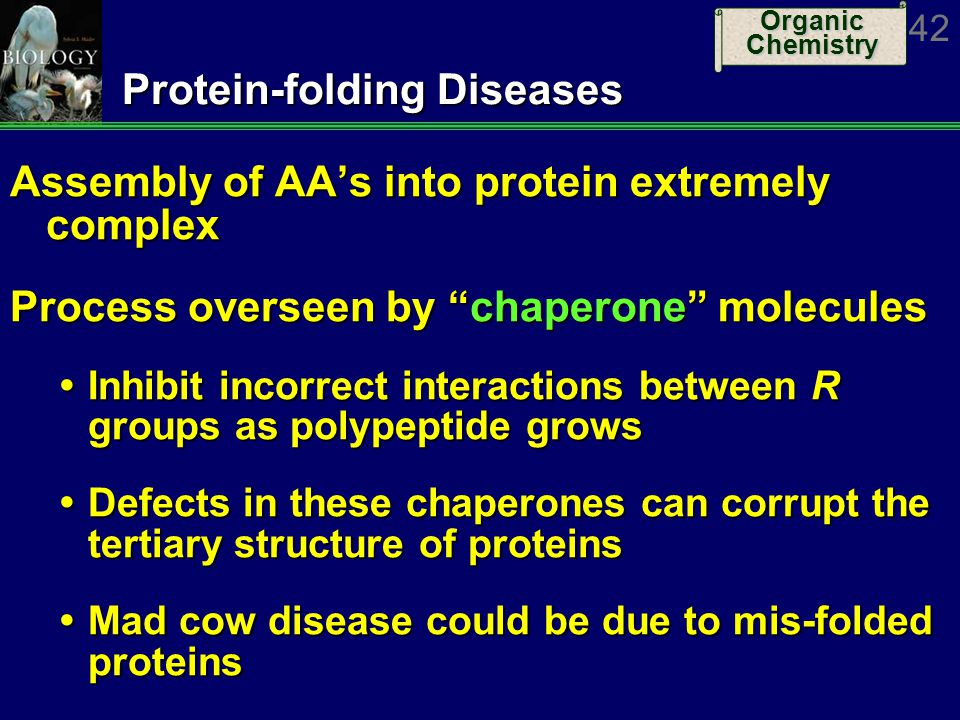 Protein-folding Diseases