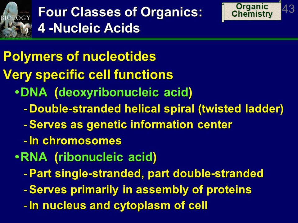 Four Classes of Organics: 4 -Nucleic Acids