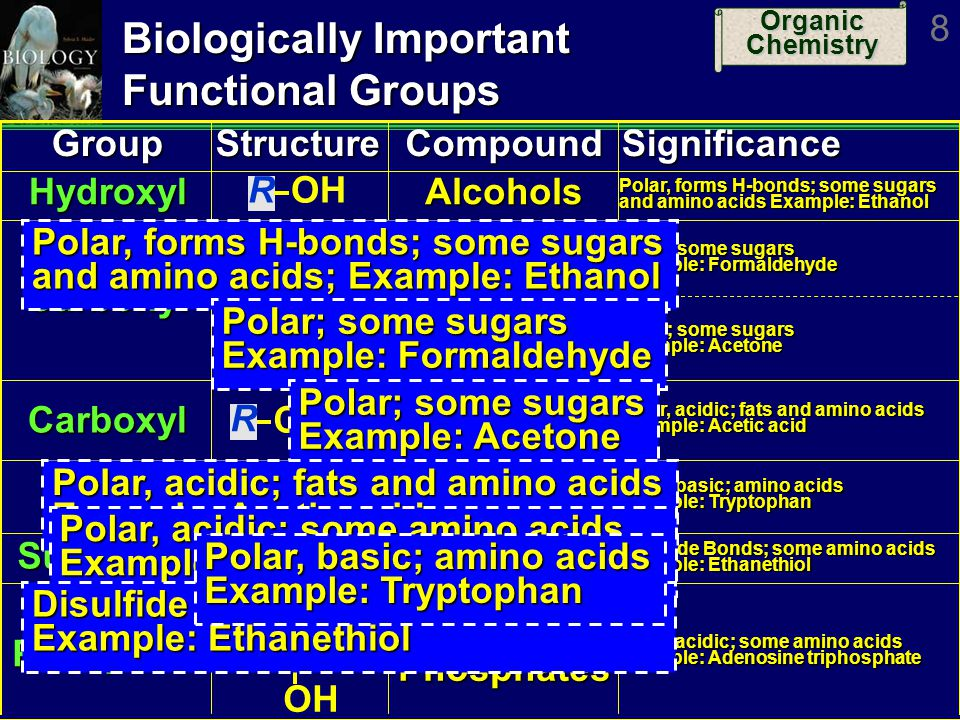 Biologically Important Functional Groups