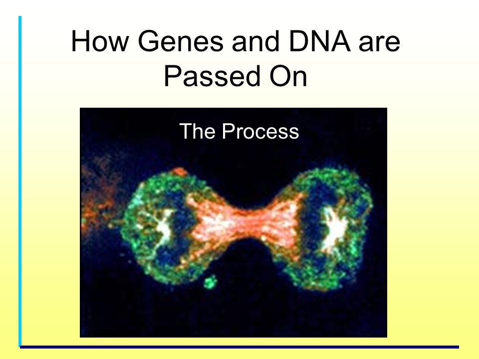 How Genes and DNA are Passed On
