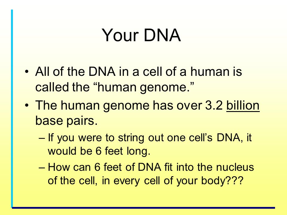 Your DNA All of the DNA in a cell of a human is called the human genome. The human genome has over 3.2 billion base pairs.