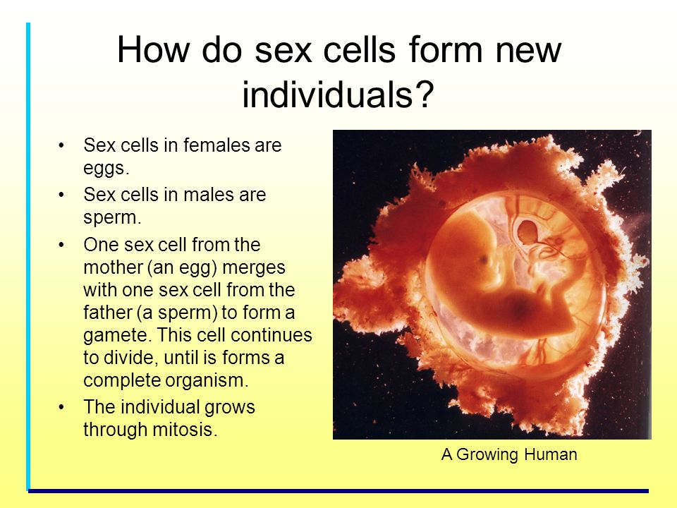 How do sex cells form new individuals