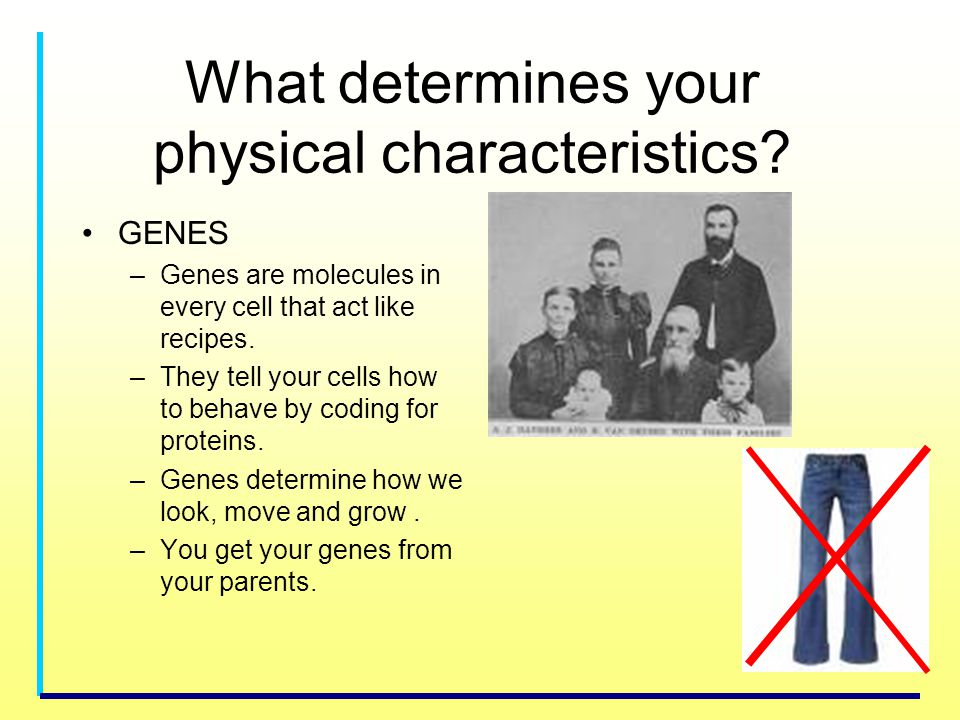 What determines your physical characteristics