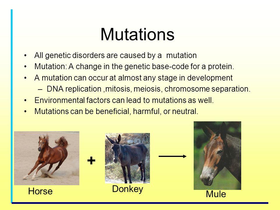 Mutations + Donkey Horse Mule