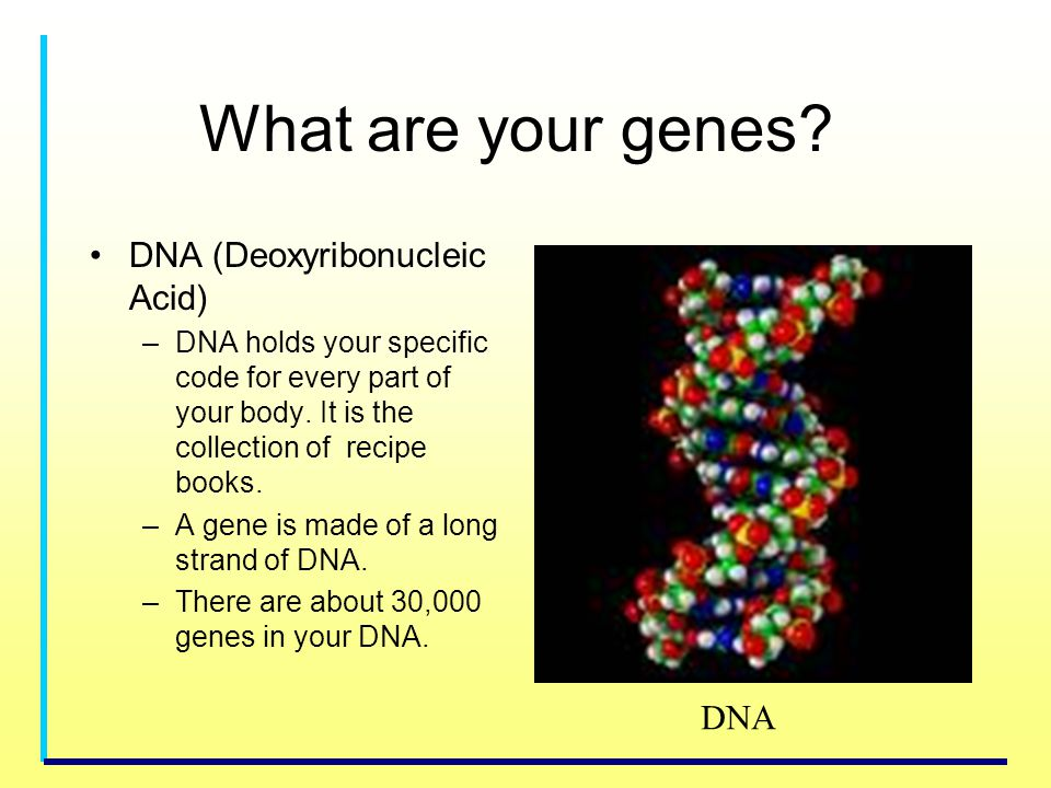 What are your genes DNA (Deoxyribonucleic Acid) DNA