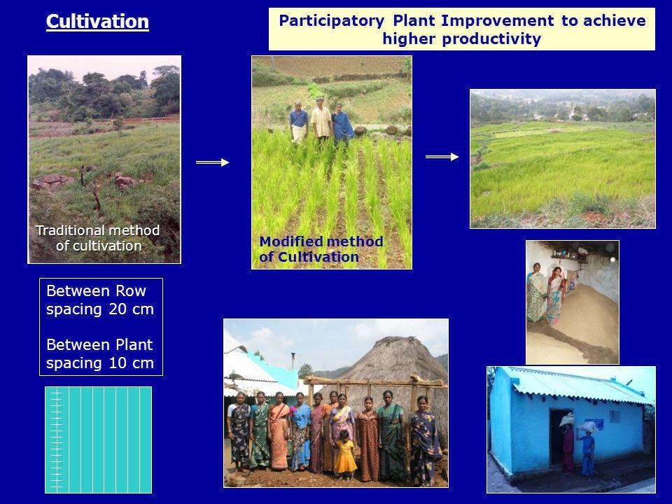 Participatory Plant Improvement to achieve