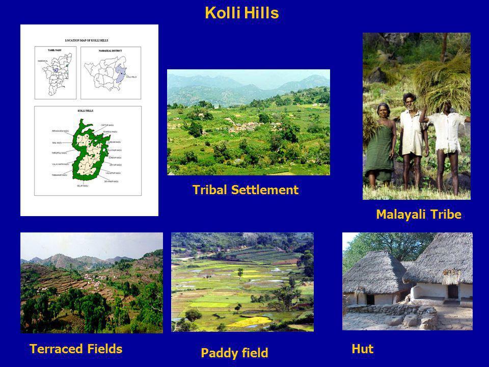 Kolli Hills Malayali Tribe Tribal Settlement Terraced Fields