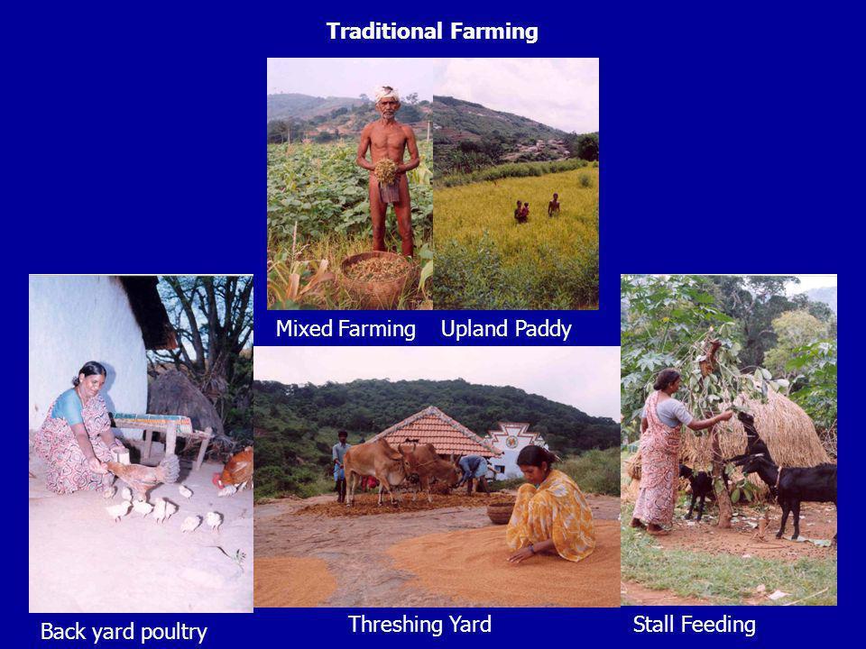 Traditional Farming Upland Paddy Mixed Farming Threshing Yard Stall Feeding Back yard poultry