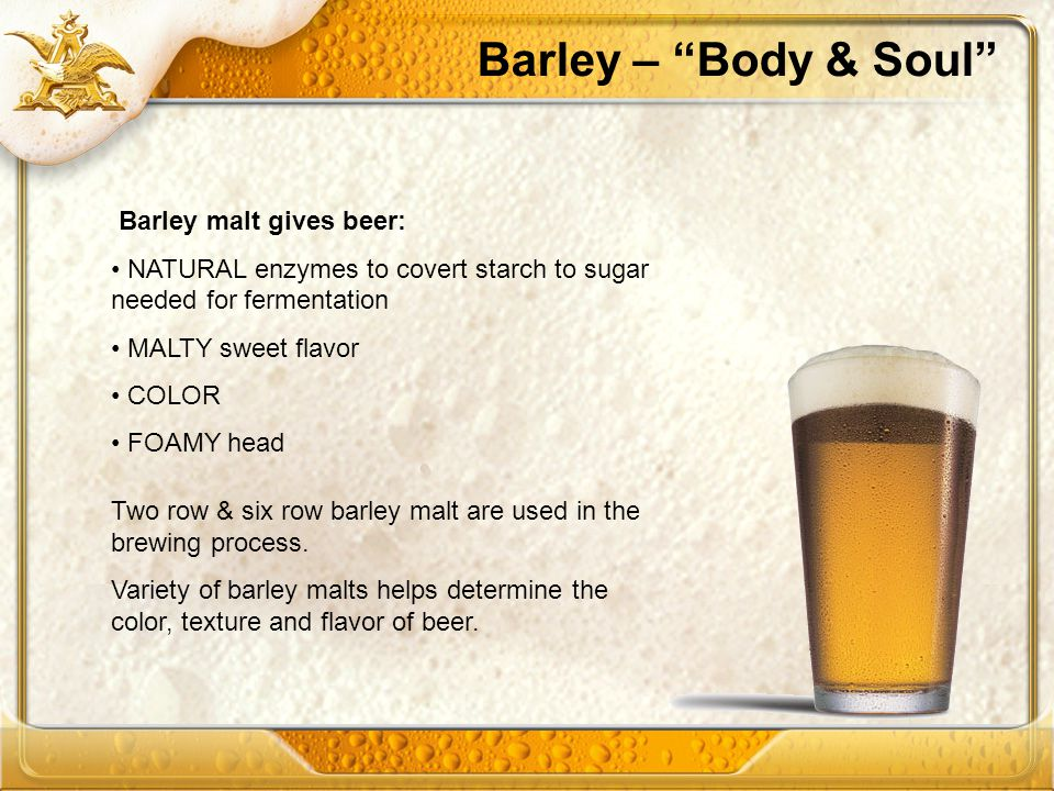 Barley – Body & Soul Barley malt gives beer: