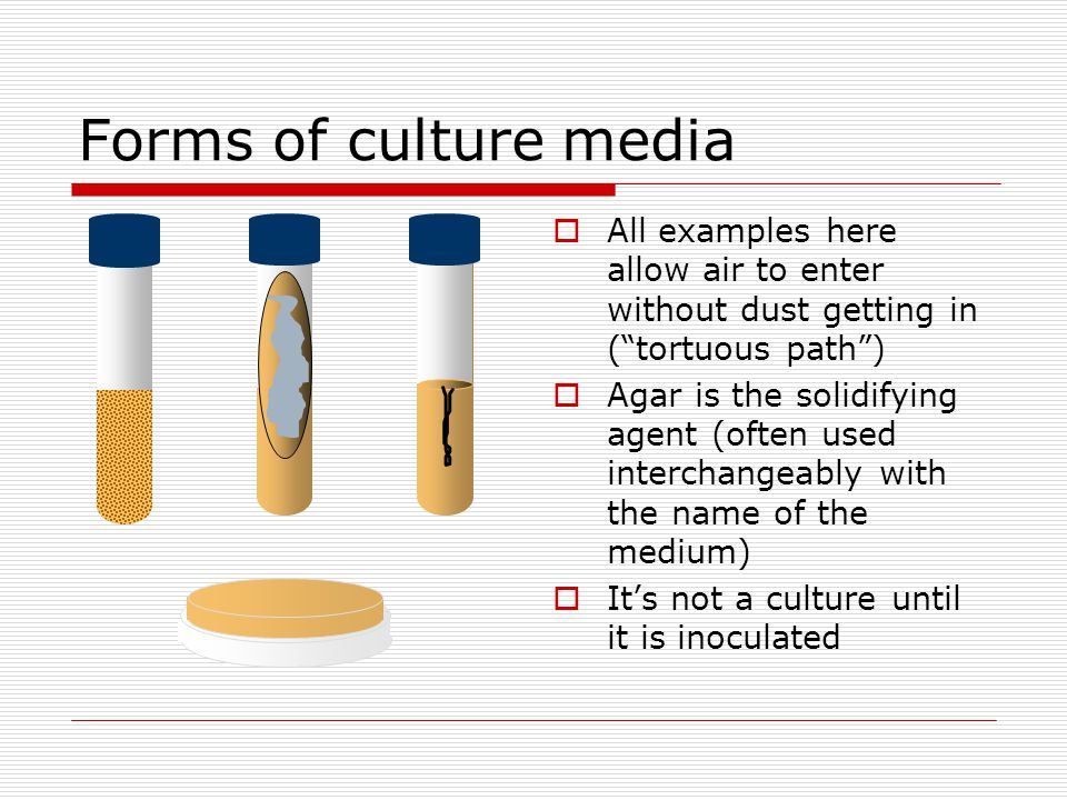 Forms of culture media All examples here allow air to enter without dust getting in ( tortuous path )
